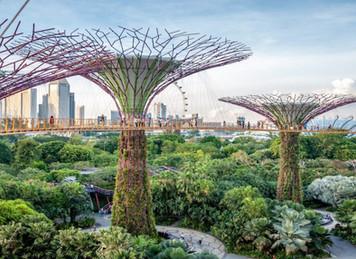 Créer comme la nature avec le biomimétisme - Flash de l'inspiration de Romane, du 12 octobre 2020