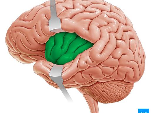 Insula: kjer se srečata telo in um
