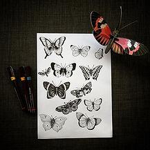 Si vous voulez un papillon dans la peau,
