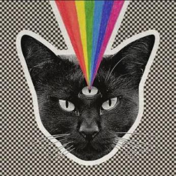 #02 Stress et pression artérielle : les bienfaits du chat pour notre santé