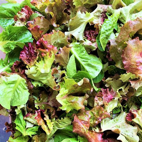 Summer Lettuce Mix