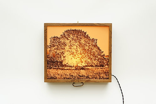 Autumn Glow Tree Lightbox