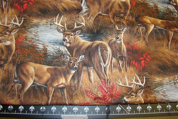 SC Deer Scene