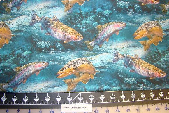 SC Troutman Basin Fish