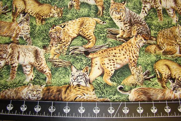 FbQ American Wildlife Bobcat