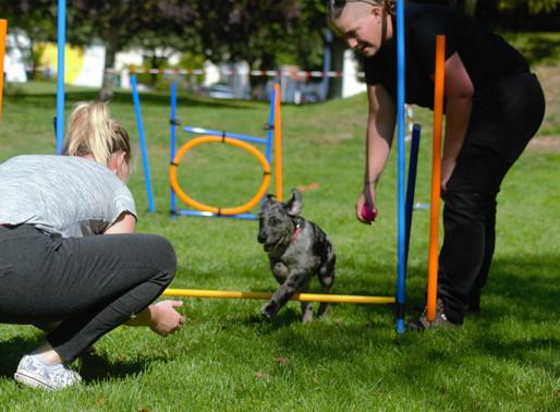 Instinct canin - Le NON, ce terrible mot à proscrire de l'éducation…