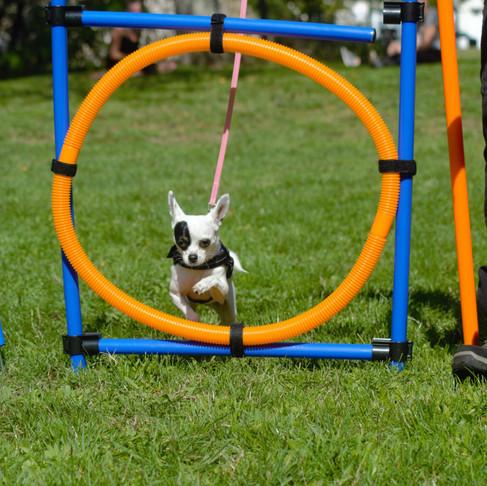 Instinct canin - Bon ou mauvais chien? On devrait plutôt dire bon ou mauvais choix!