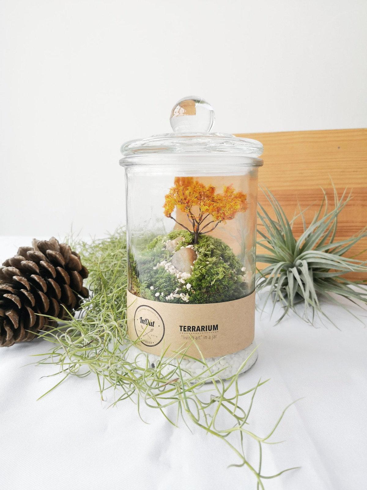 Create your Moss Garden