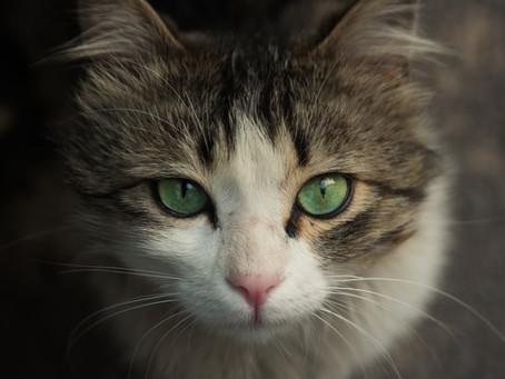 Buď ich milujeme, alebo nám vadia. Mačku má doma 20% Slovákov.