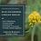Thumbnail: Wild Goldenrod Vinegar Medley