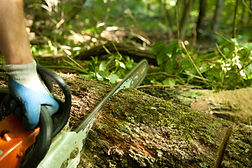 QA Level 3 Forestry First Aid (+F) whenadded to the EFAW course will meet Foresty First Aid +(F) needs. Sussex First Aid Courses