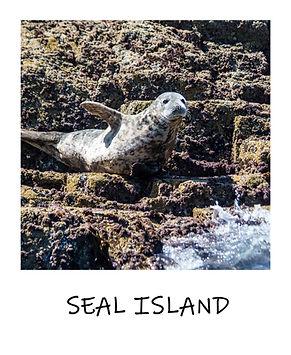 Seal Island polaroid.jpg