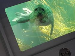 Seal through window
