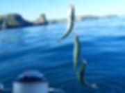 Mackerel Fishing boat trip cornish crest