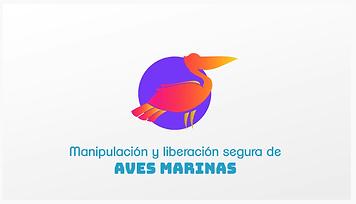 Aves marinas manipulación.png