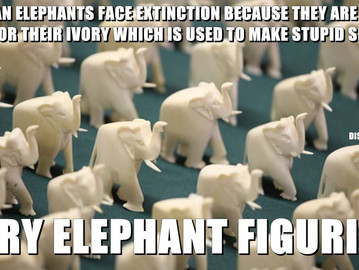 African elephants face extinction over their ivory.