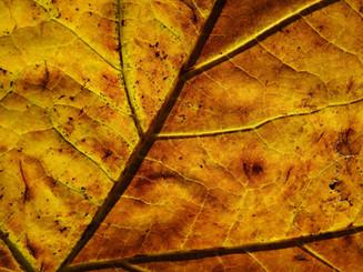 leaf-3755340.jpg