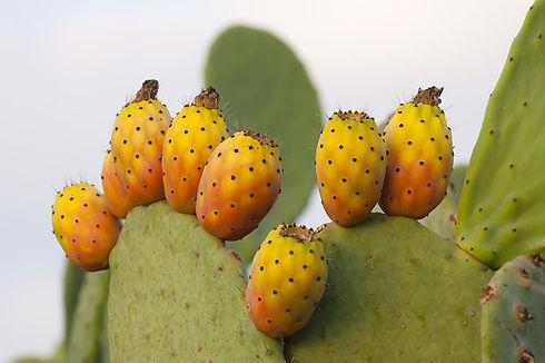 Cactus leatherjpg.jpg