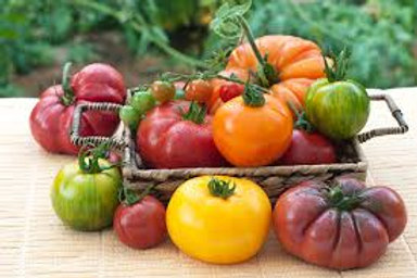 TOMATES COLLECTION