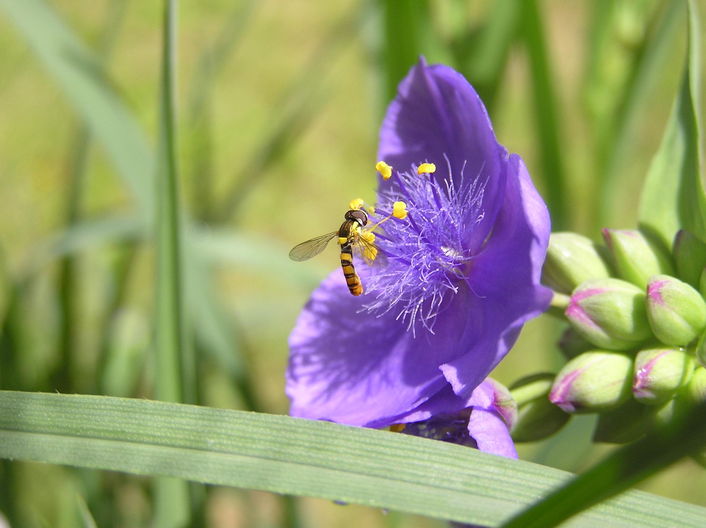 花と蜂 P1010027