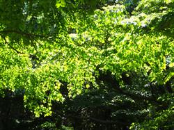 木洩れ日 s4