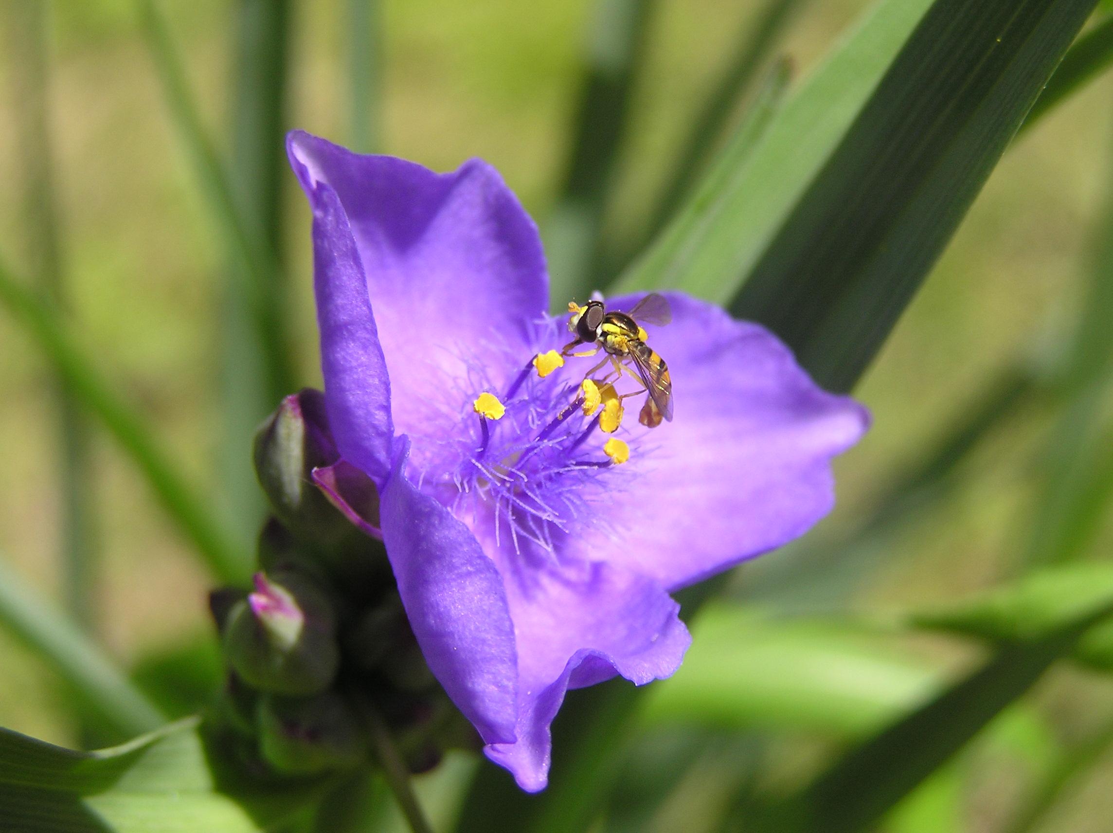 花と蜂 P1010021