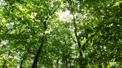 木漏れ日 DSCF4453 (2)