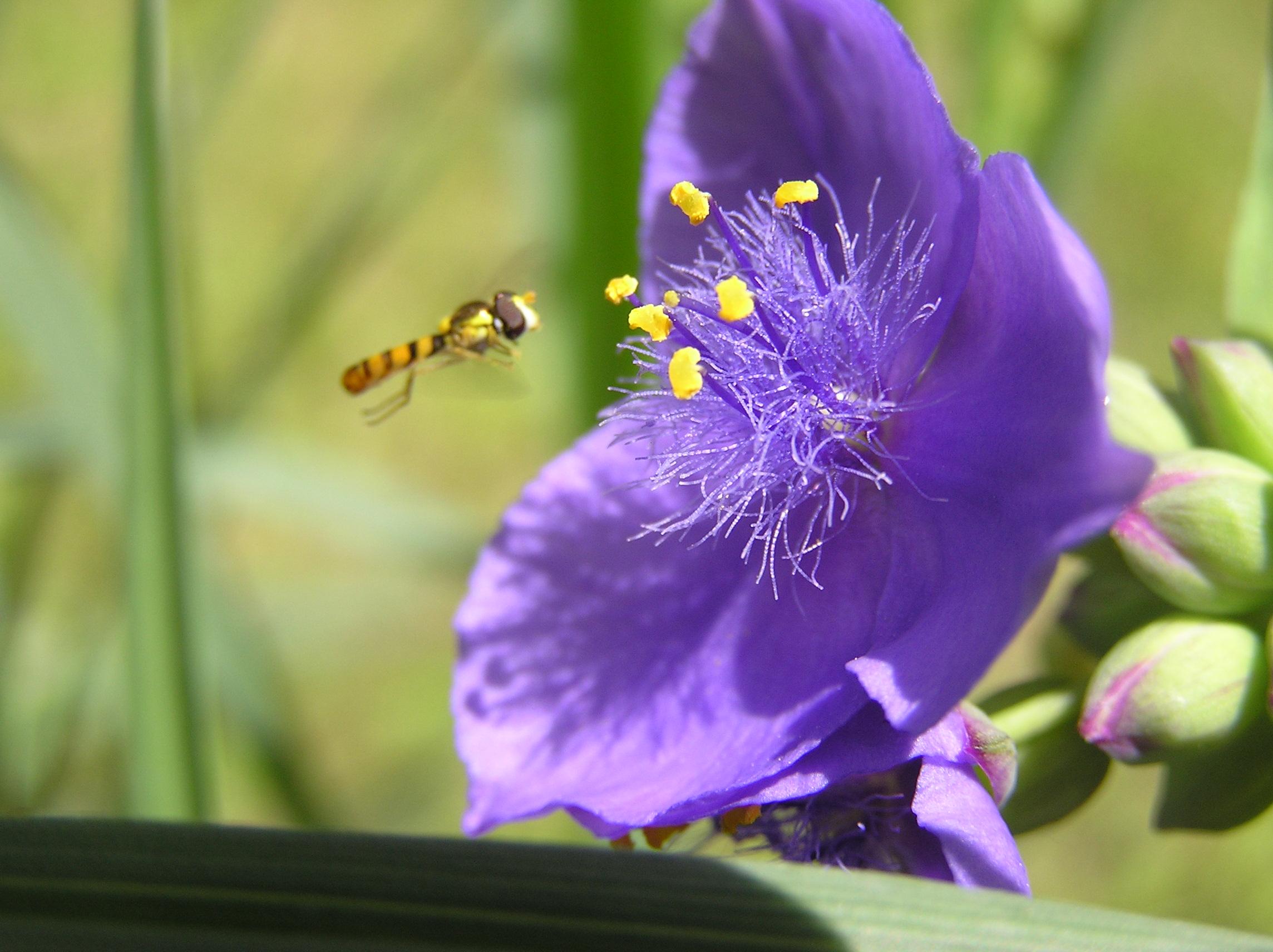 花と蜂 P1010029