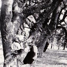 Sisters in the Oaks