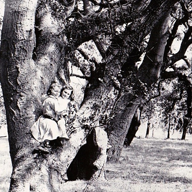 Sisters in the Oaks