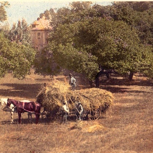 Harvesting Hay