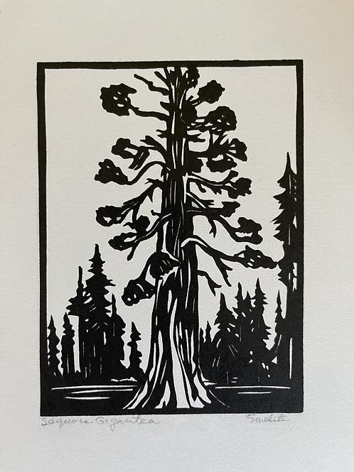 Sequoia Gigantia