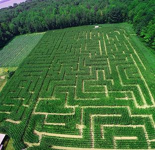 Labyrinthe mais_Verger Labonté 2020.jpg