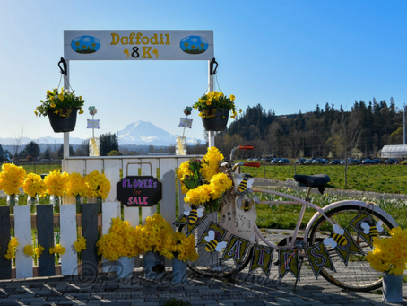 Daffodil 8k Photos