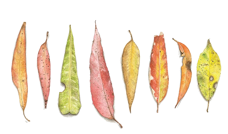 stand-alone-wild-art-leaves.png
