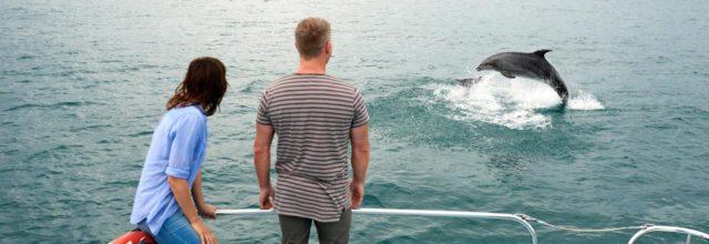 dolphin-spotting-640x220