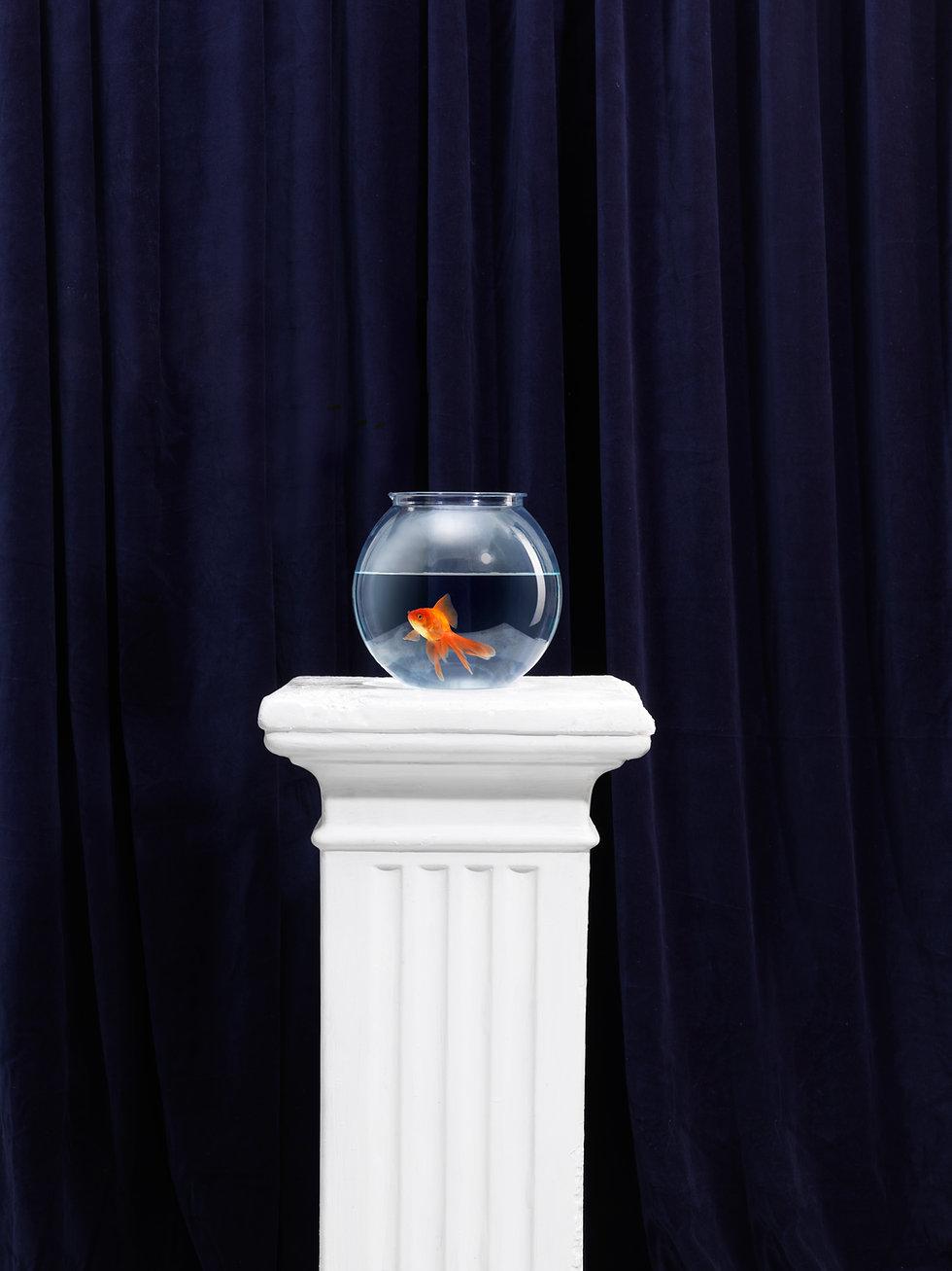 Aquarium with a goldfish on a pedestal