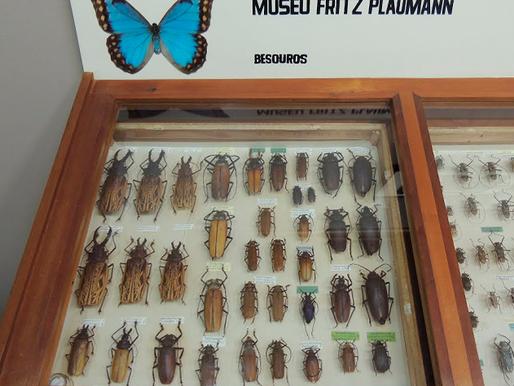 Maior museu entomológico da América Latina abriga 80 mil insetos