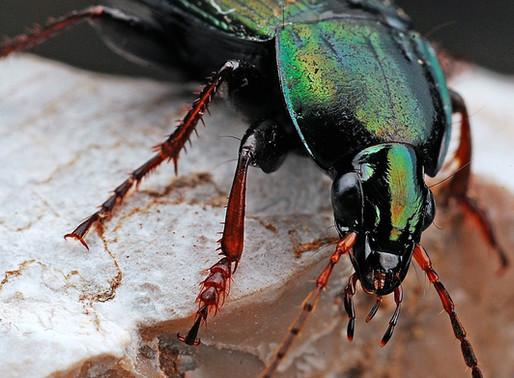 15 curiosidades incríveis sobre os insetos