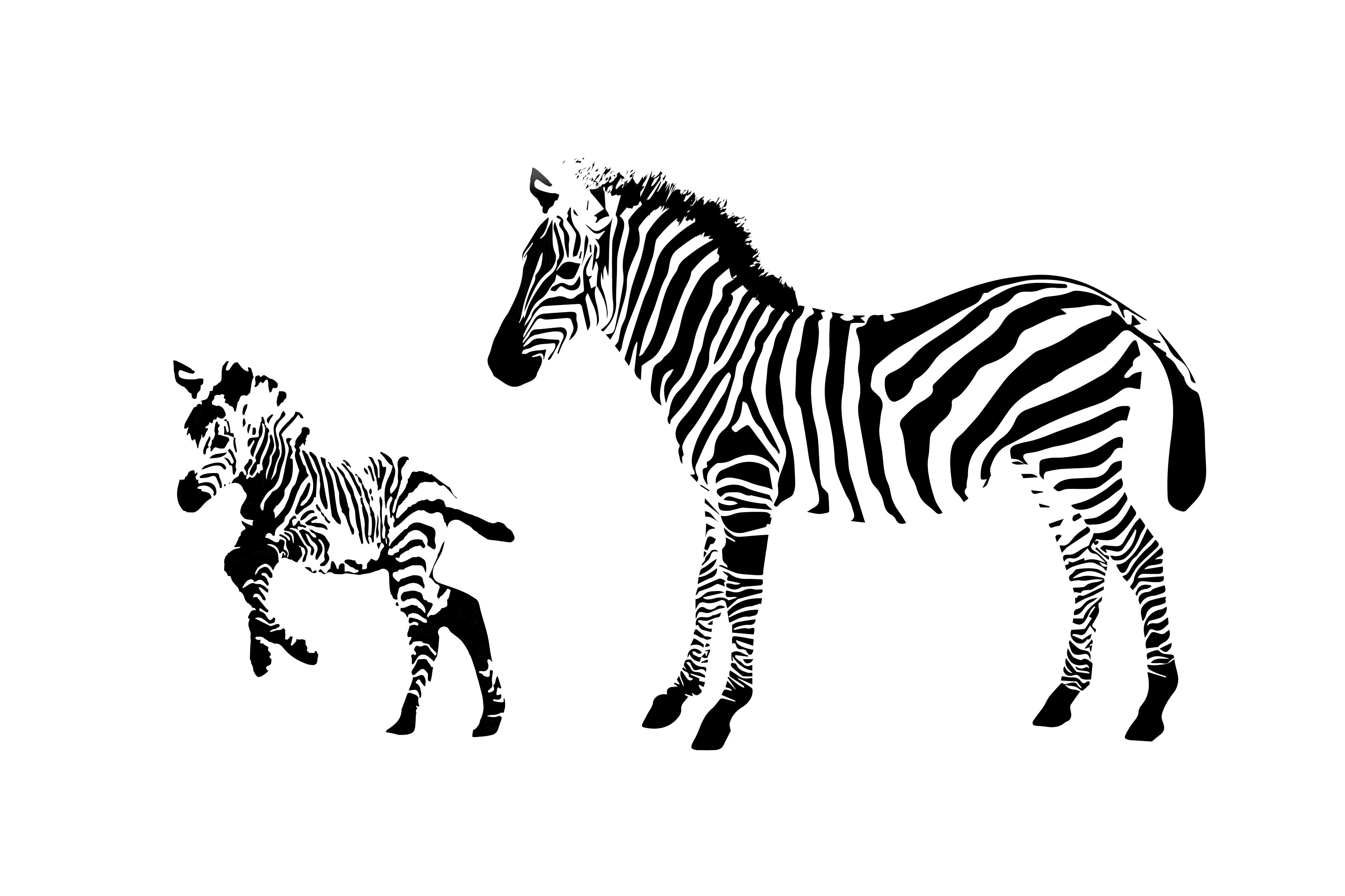 White Space Zebra