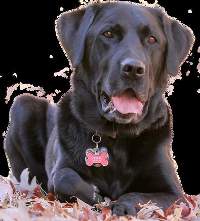 Katie's dog Ebb