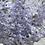 Thumbnail: Kanku bloom of the week : Hyacinth