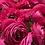 Thumbnail: Kanku bloom of the week - Rananculus