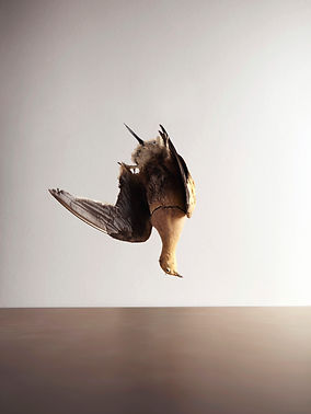 @marionkotlarski stilllife bird