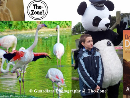 Zone-Out! Marwell Zoo Dream Night