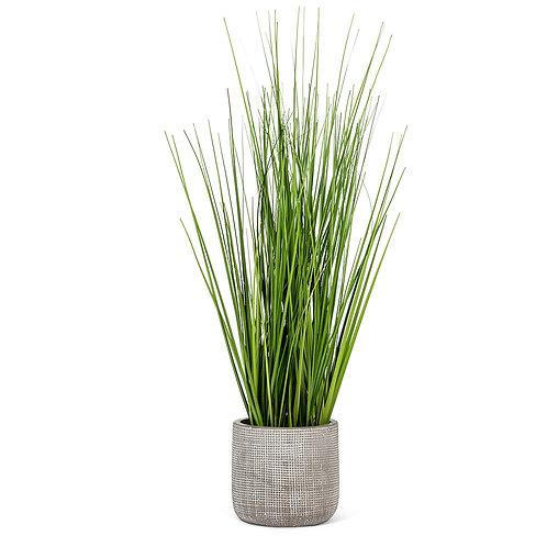 Tall Grass in Grey Pot