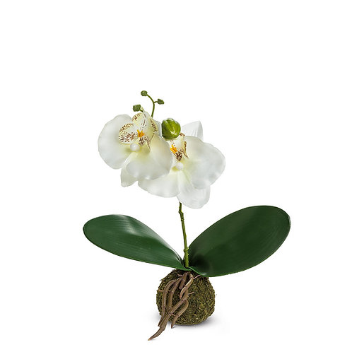 White Orchid with Grass Ball