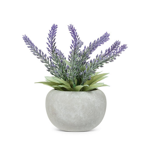Lavender Bunch in Pot