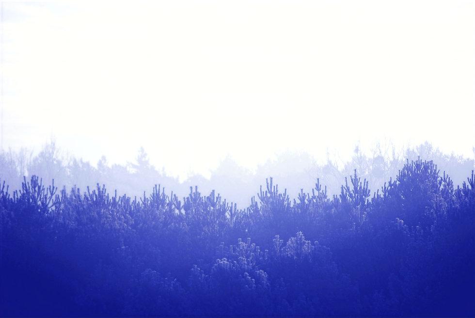 Forest%2520Landscape_edited_edited.jpg