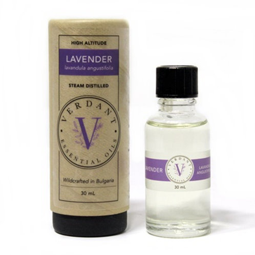 Lavender (Wildcrafted)